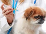 I'll vaccinate your dog or cat with anti rabies vaccine